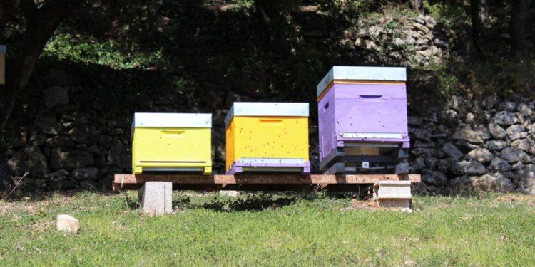 Le pesage au service de la santé des ruches